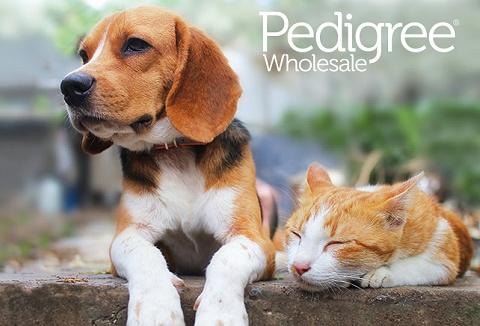 Link to the Pedigree Wholesale Ltd website